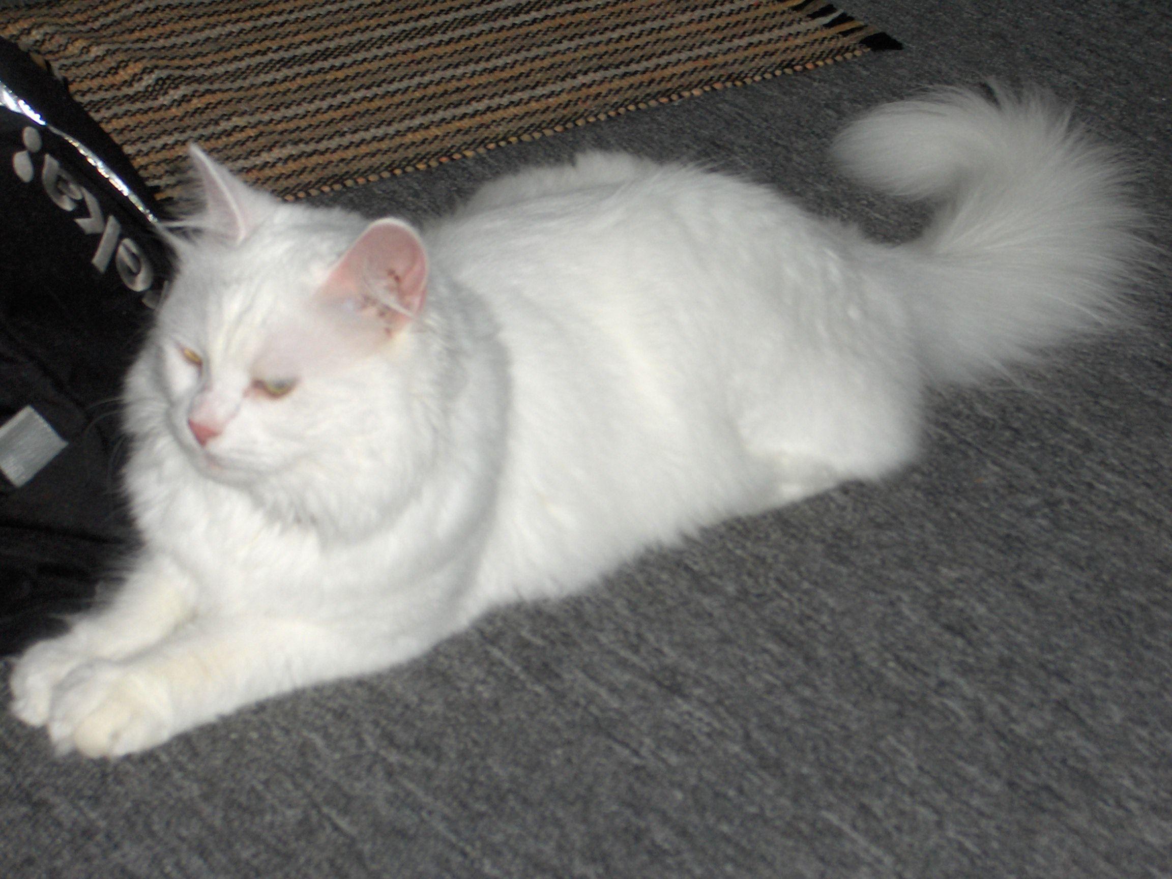 Mon chat kiwi - Mon chat me colle plus que d habitude ...