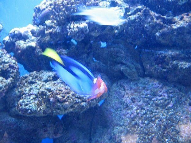 Nemo et doris aquarium du qu bec - Nemo et doris ...
