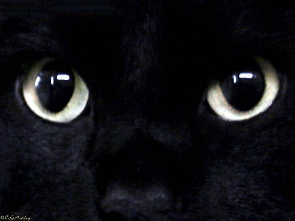 Félinité... dans Le chat kxfxsm5t